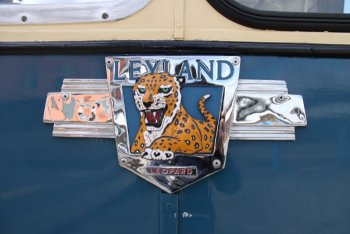 Leopard Badge